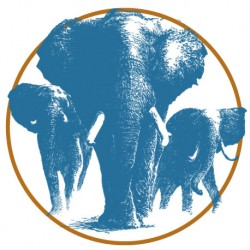 Sticker Eléphants